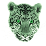 ARTIST/CEO Chui Records / Green Leopard, Inc.